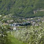 Apfelbluete-Suedtiroler-Unterland-10