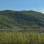 Apfelbluete-Suedtiroler-Unterland-16