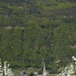 Apfelbluete-Suedtiroler-Unterland-22