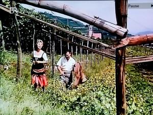Weinberge in Tramin. Szene aus dem Film: Mein Schatz ist aus Tirol.