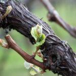 Wein-Mezzolombardo-02