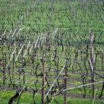 Wein-Mezzolombardo-03