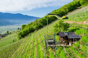 Giggerblick - im Tulpenreich über Rung bei Tramin