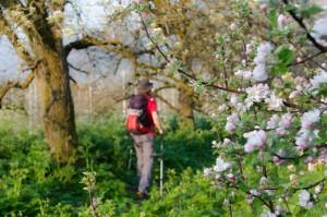 Spaziergang durch die Obstfelder des Südtiroler Unterlandes